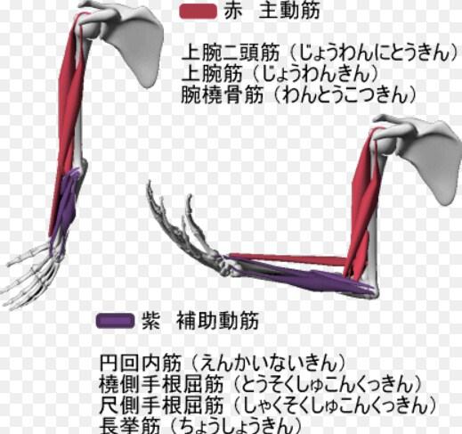 硬くなった筋肉を調整する方法