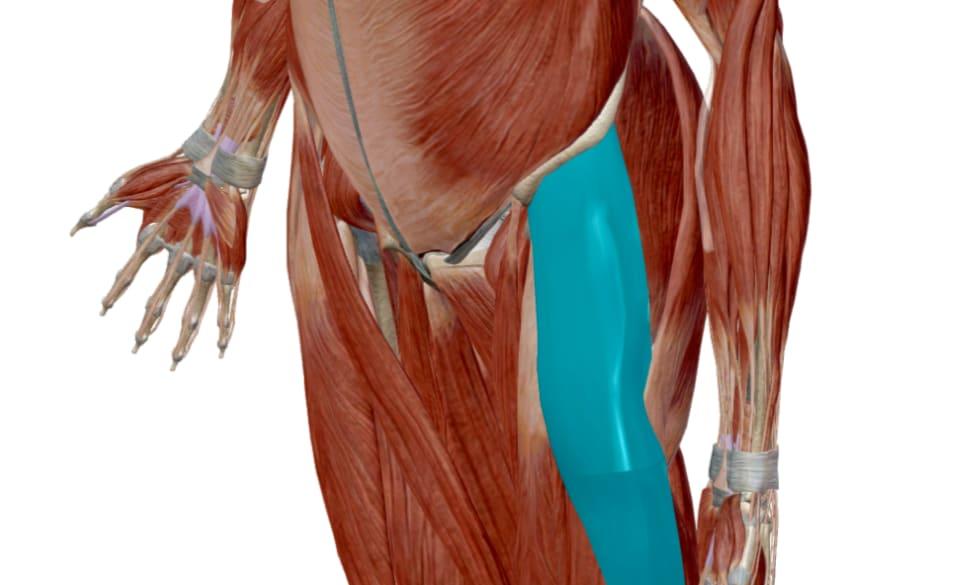 膝周り硬くなりやすい筋肉(大腿筋膜張筋)